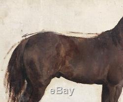 Tableau Ancien Huile Esquisse Portrait De Cheval Pierre Gavarni (1846-1932)