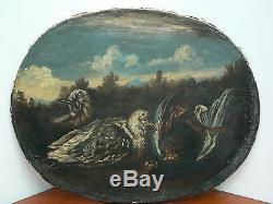 Tableau ancien Pigeons Oval sur toile HST Ecole Italienne XVIIIème